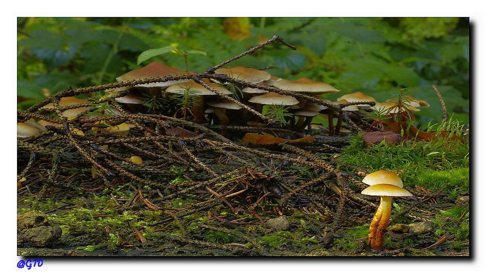 Pilzlandschaft